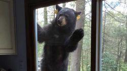 ブラウニーを焼いていたら、クマがやってきたんだけど(・(ェ)・)クマー