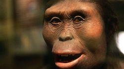 猿人「ルーシー」の300万年前の死因が明らかに「彼女の人間味がより増してきた」