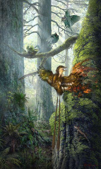 琥珀に恐竜時代の鳥類の翼