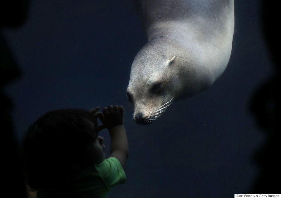 鏡を舐めるオランウータンから数千人の遊泳大会まで、世界の今がわかる写真集