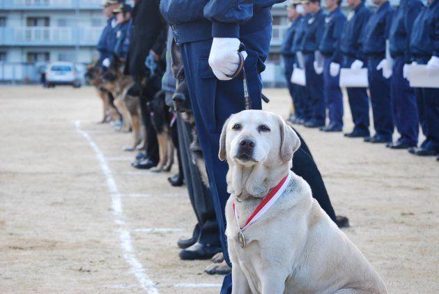 警察犬だけがもらえるメダルを身につけたきな子。7回目の挑戦で夢を叶えた
