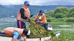 水草が大量発生し続ける諏訪湖を救うため、立ち上がった市役所 何をしているのか