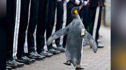 ペンギンさまのお通り?