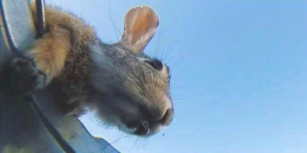 動物たちがバケツの水をゴクゴク飲む動画、何だか心が洗われる