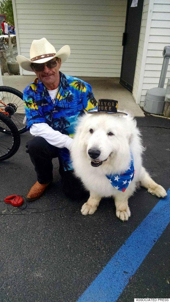 かわいすぎる犬の市長、圧倒的支持で3選を果たす(画像)