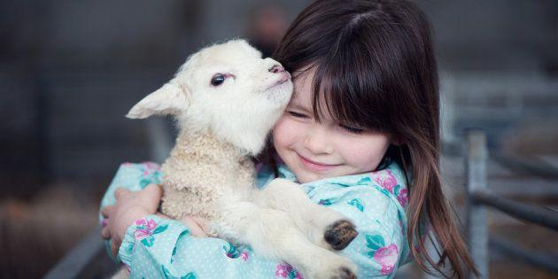 ヒツジと抱き合う少女