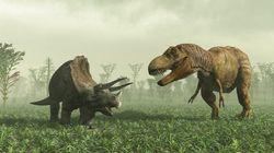 恐竜系統樹の枝ぶりが変わる?