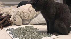 トリックアートを見て頭が混乱する猫(動画)