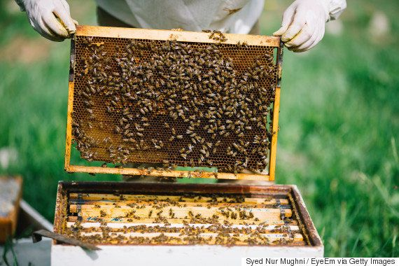 ディープラーニングで蜂たちを致死的な害虫から救う養蜂家作のアプリBeeScanning