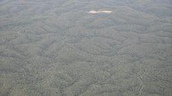 やんばるの森、世界自然遺産「登録延期」の背景/