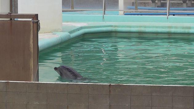 閉鎖後も屋外のプールで暮らす、イルカのハニー。頭部から背中にかけて、ひび割れのような傷があったが、県によると「いまは回復している」という=2018年3月、動物保護団体「ピース」提供