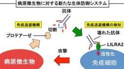 微生物vs.ヒトの感染攻防最前線 ─
