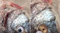 魚の鮮度を、眼にシールを貼ってごまかした魚屋さん。営業停止と引き換えに爆笑をかっさらう
