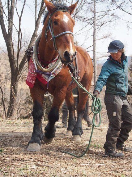 引退した競走馬がつくる里山の未来