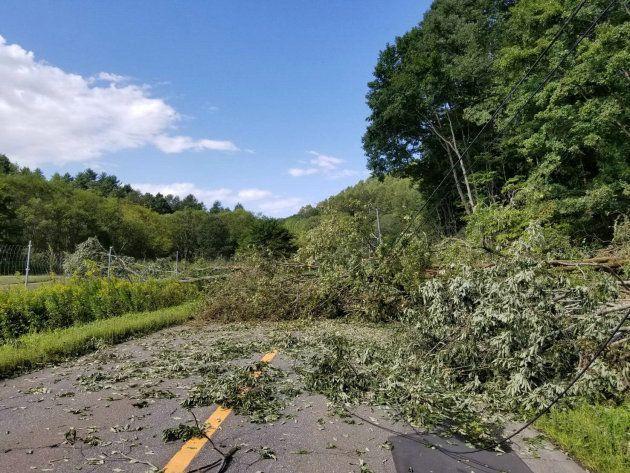 倒木でふさがれた厚真町へ続く道道59号=北海道むかわ町