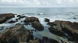米国西海岸、400kmにわたってオキアミが大量死