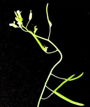 植物には、まっすぐになろうとする力が働いている (著者インタビュー)