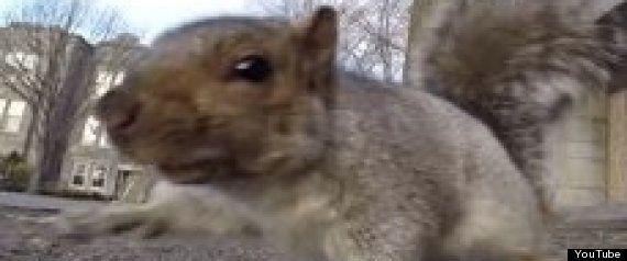 ガジェットにくわしいリス、GoProを奪って自然の驚異を写し出す(動画)