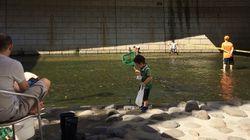 「神田川にアユがいた!」
