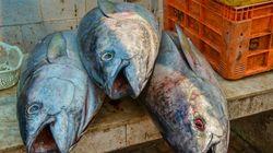 魚の水銀汚染、起源は石炭火力発電所