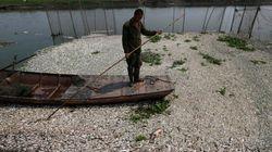 40kmにわたって魚の死骸が浮かぶ中国の川(画像)