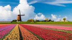 寛容とは何か オランダと日本の移民問題をさぐる(2)