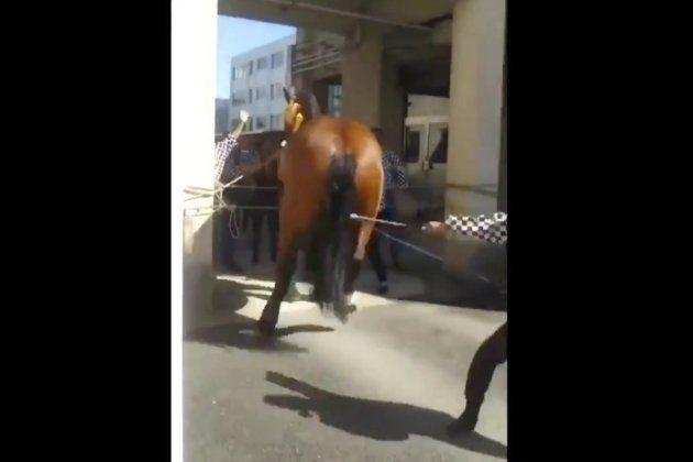ムチ打たれた馬が、嫌がって跳ねると歓声が沸いた。