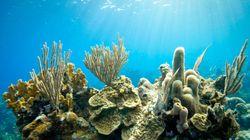 宝石サンゴの持続的な利用に向けた取り組み強化を 報告書発表
