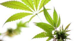 賛成52% 米国で加速する「マリファナ合法化」の動き