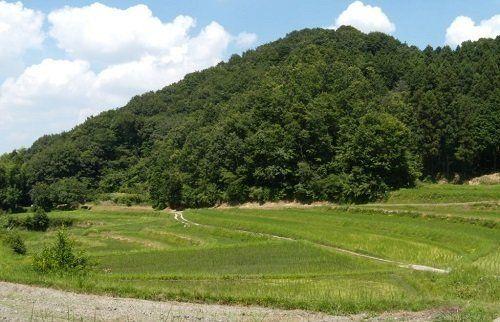 消える身近な農空間/生物多様性の宝庫として田んぼや里地を守るには