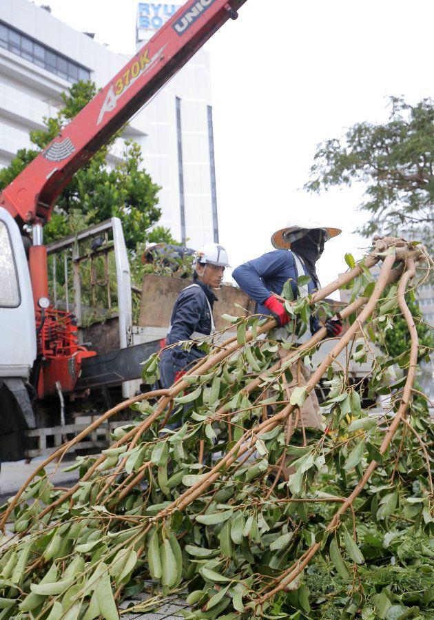 台風24号の強風で倒れた街路樹を撤去する作業員=30日午前、那覇市