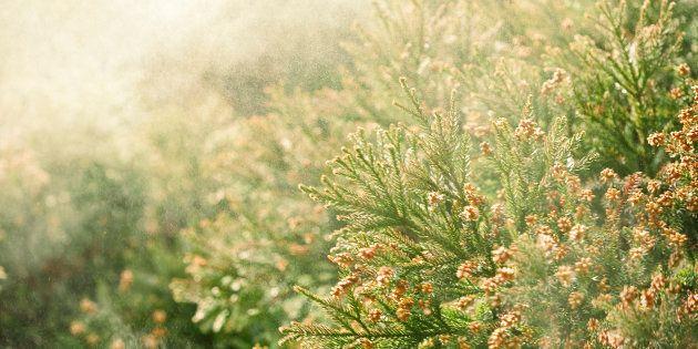 写真は花粉のイメージ画像です
