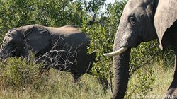 違法な野生生物取引の撲滅を目指す「カサネ会議」が終了