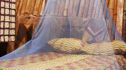 世界最小最強の殺人兵器「蚊」に私たちは何ができるか