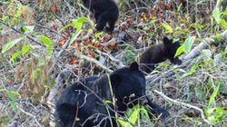 開催報告:日本のクマプロジェクト最終報告セミナー