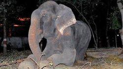 50年間の虐待から救出されて涙を流したゾウ