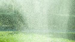 注目すべき「環境蓄雨」/都市の生態系ネットワークの鍵