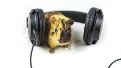 運動で生じる音を抑える仕組み