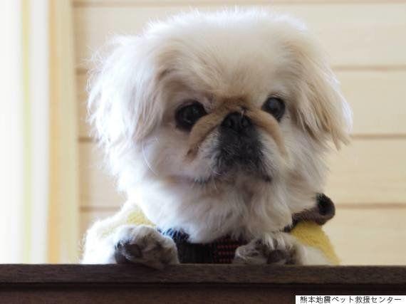 熊本地震ペット救援センターに預けられたペット