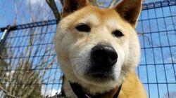 【熊本地震】「飼い主の責任を噛み締めてほしい」震災で明らかになったペットをめぐる課題とは
