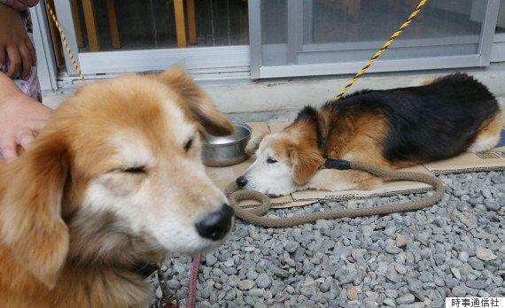 避難所には入れず、外で生活する避難者のペットの犬たち(2016年4月)