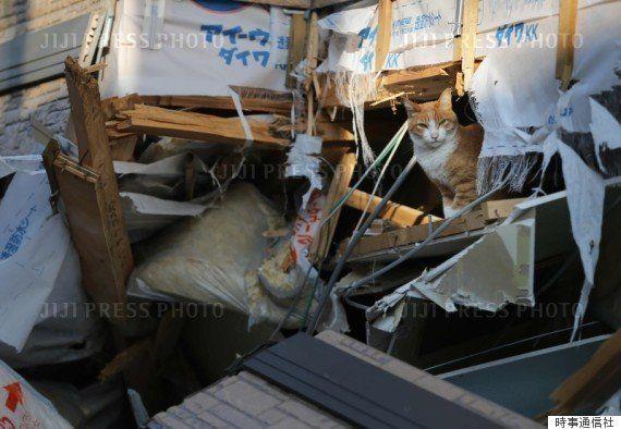 倒壊した家から顔をのぞかせる猫(2016年5月13日)