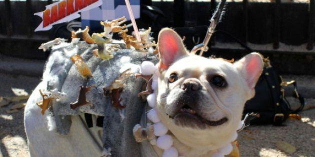 ワンちゃんハロウィン仮装146連発!2013年ニューヨーク・ハロウィン・ドッグパレード【画像集】