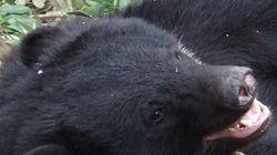 四国のツキノワグマ個体群の「保護計画」の策定を