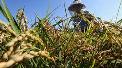 減反廃止でコメ農家に国際競争力つくのか?