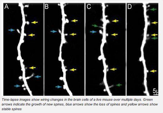 コカイン吸入1回で脳の「配線」が変化