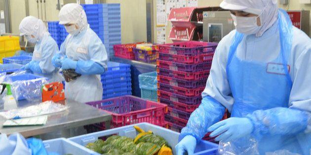 食品加工工場で作業するベトナム人の技能実習生=埼玉県加須市