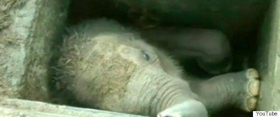 ゾウが投げた石が7歳の女の子の頭に当たって死亡 モロッコの動物園で