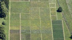 かつて酸性化した土壌での生物多様性の回復