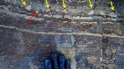 地球最古の生命の痕跡への疑義